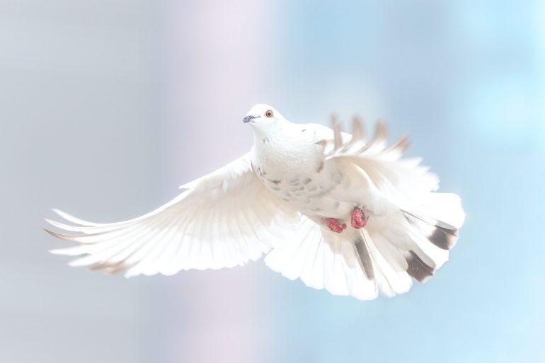Weihnachtsgedicht für mehr Frieden